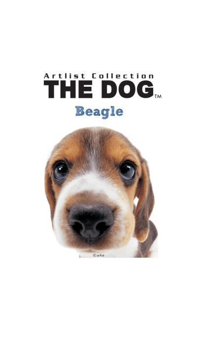 THE DOG Beagle