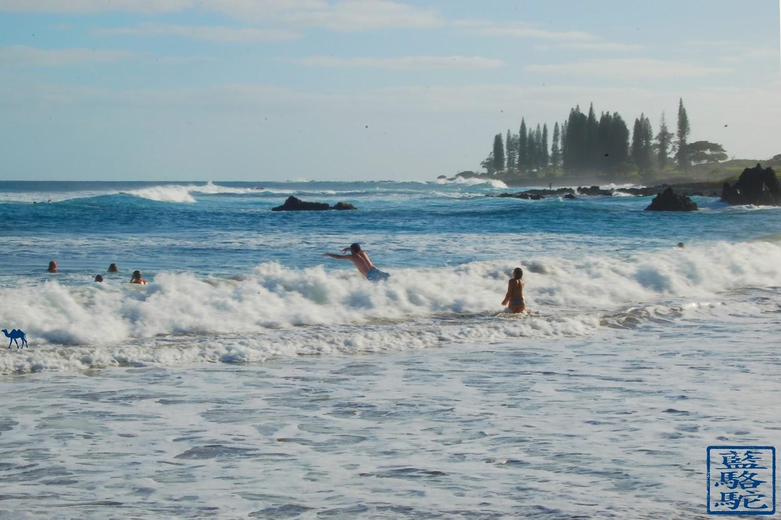 Le Chameau Bleu - Vagues d'Hawaii