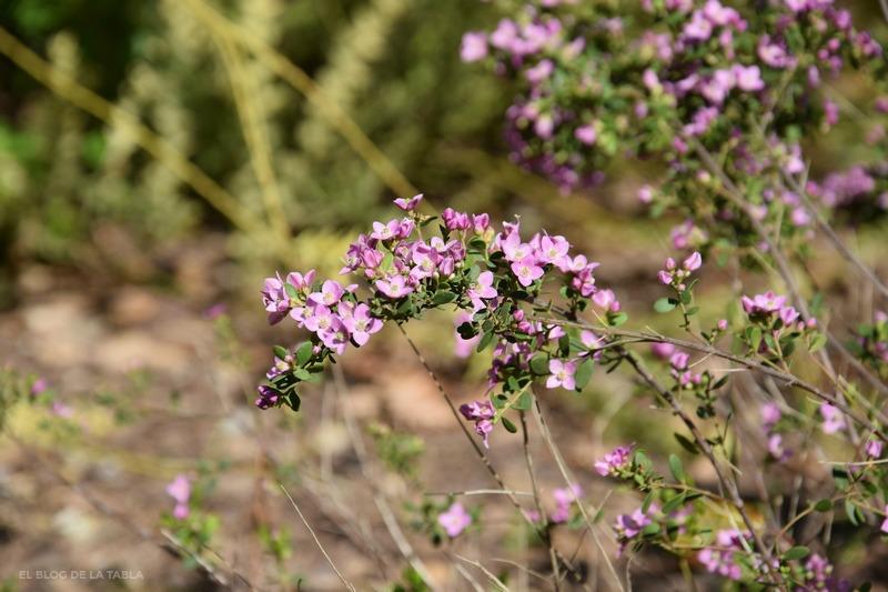 flores de color rosa de plantas mediterráneas