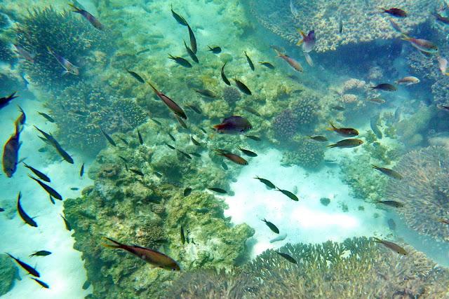 snorkeling, schnorcheln, daymaniyat, islands, inseln, oman, Muscat, meer, schiff, boot, boat