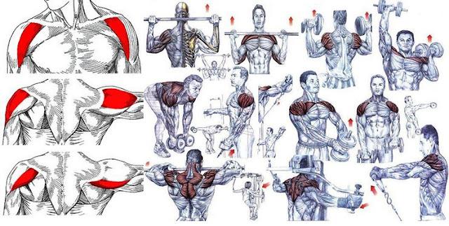 Exercises + Tips For A Complete Shoulder Workout