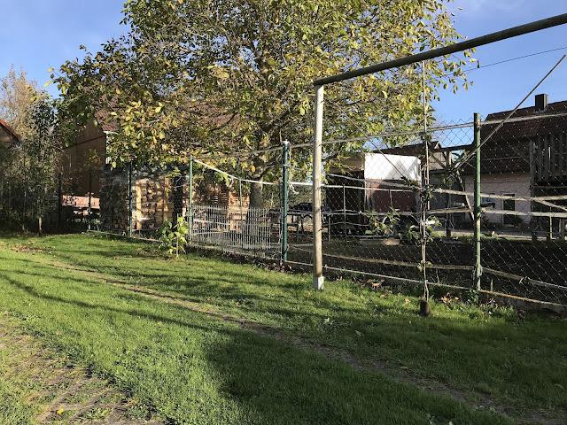 Säulenobst und Spalierobst- unser Obstgarten im Garten