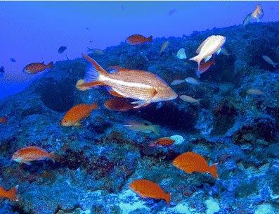 in Northwestern Hawaiian Islands courtesy NOAA
