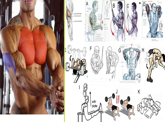 Chest And Triceps - Muscles to Grow Bigger
