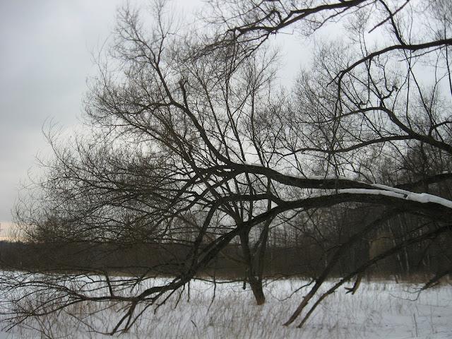 Заснеженный Измайловский парк