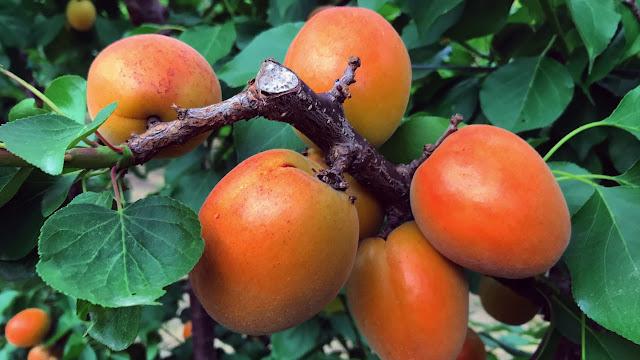 Απάντηση Βορίδη σε Ανδριανό για την εκτίμηση των ζημιών στην καρπόδεση βερικοκιών στην Αργολίδα