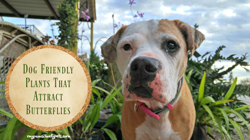 8 Dog Friendly Plants That Attract Butterflies | Pawsitively Pets