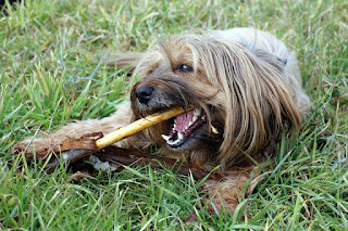 dental chews for dogs