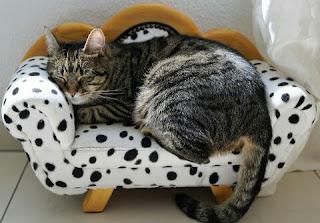 Cara Mengatasi Kucing Stres Beserta Penyebab dan Tanda Tandanya