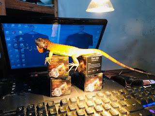 cara memelihara reptile
