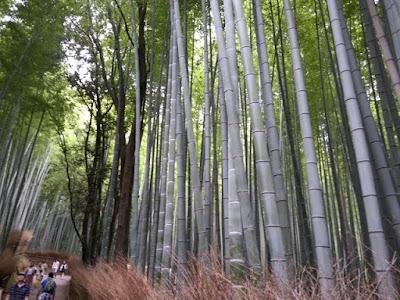 Bosque bambú Arashiyama