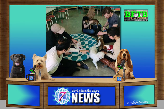 BFTB NETWoof News set with The Dog Cafe background photo