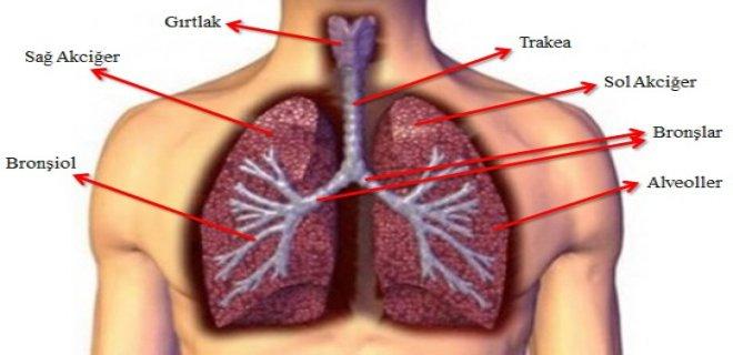 Alt Solunum Yolu Hastalıkları Ve Belirtileri