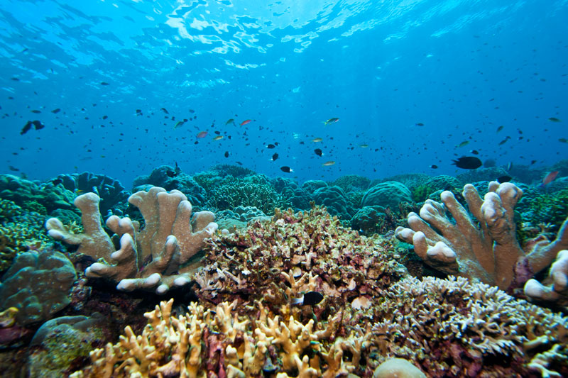 Pemandangan bawah laut Kepulauan Mentawai