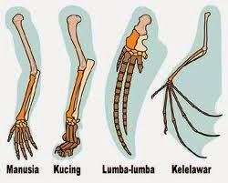 Evolusi Homologi