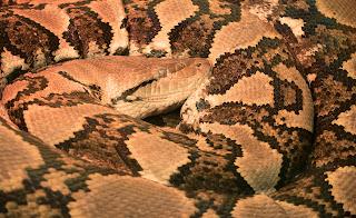 python reticule