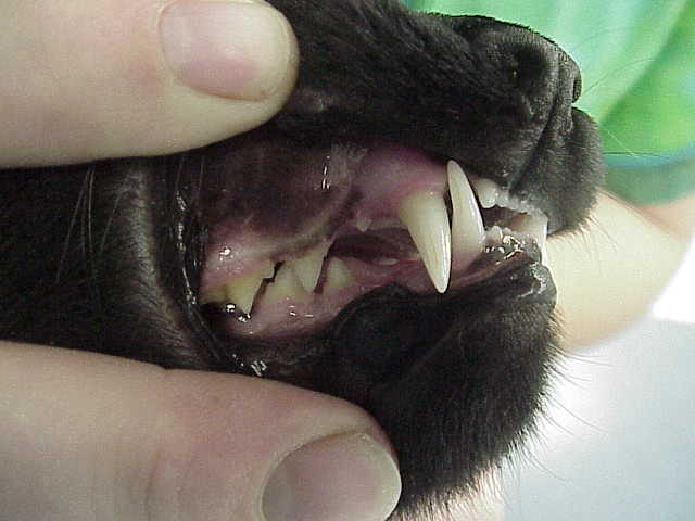 Cat Tooth Extraction Aftercare Revolutionhr