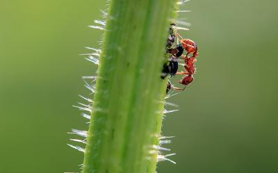 Cara Membasmi Semut dan Keong Pada Tanaman