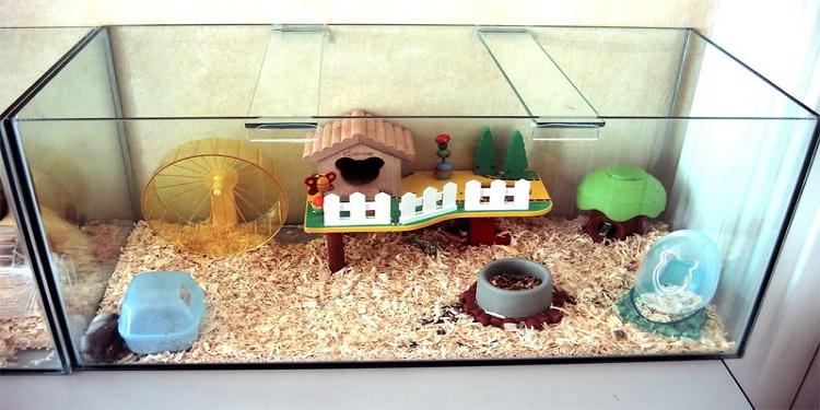 Pelihara Hamster Di Kosan Science For Everyone