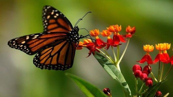 Calentamiento global afecta la fauna de bosques tropicales