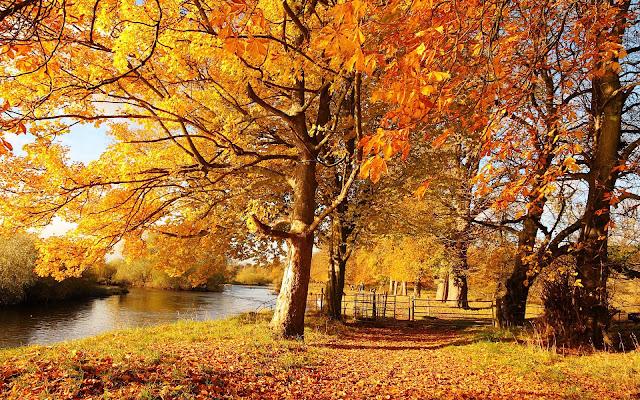 Een riviertje en bomen met herfstbladeren