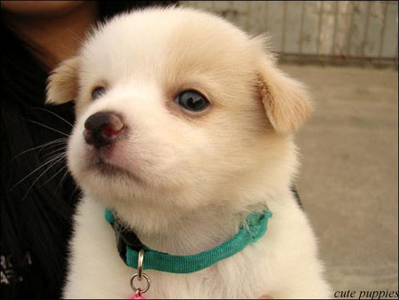 Pictures of Gorgeous cand cute puppies | Nice Wallpapers ...