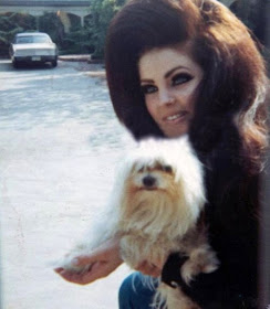 Club Fashionista All About Priscilla Presley Her Life In Photos