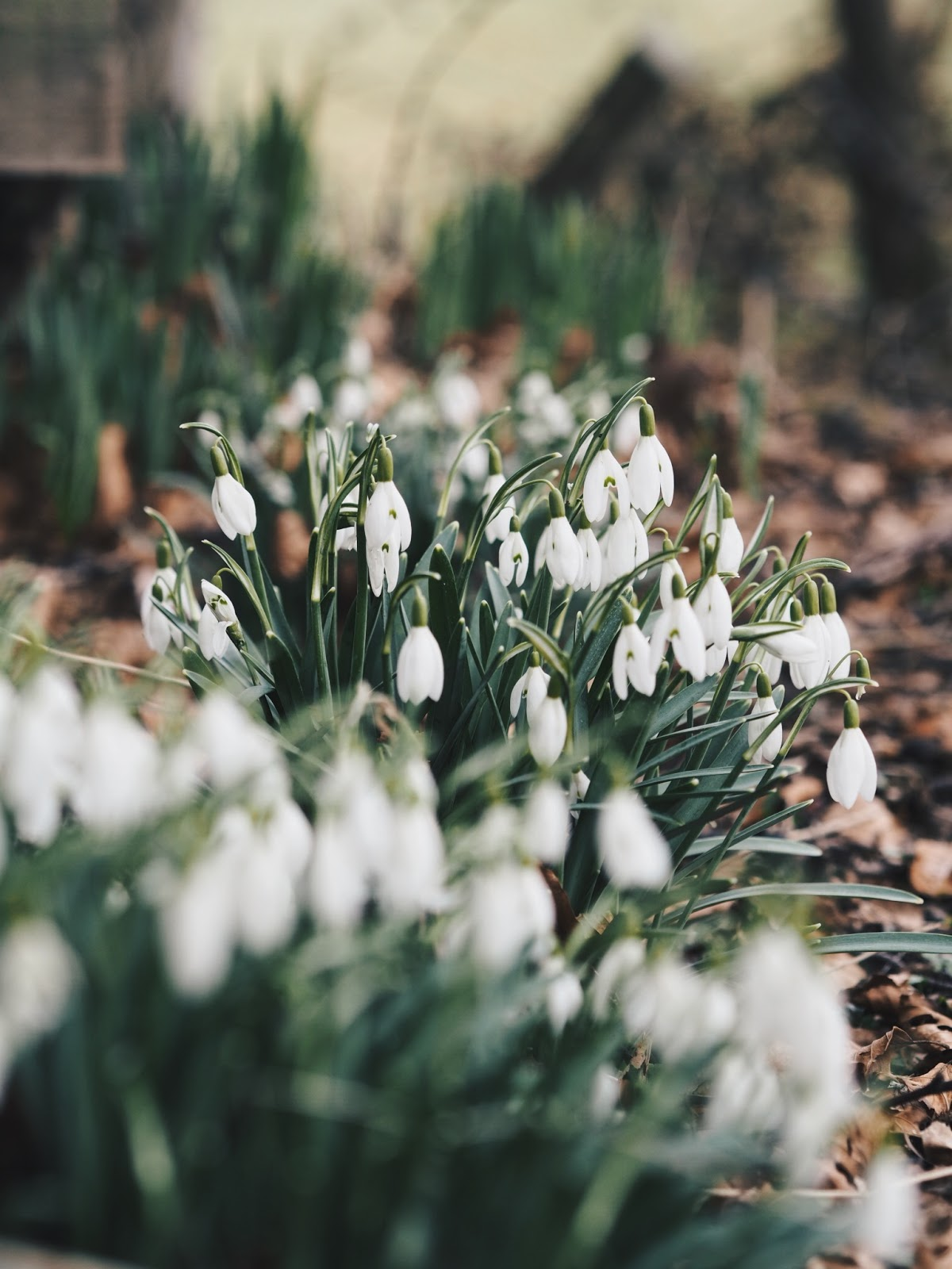 snowdrops blogging comparison
