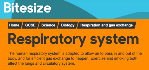 Unit of study on the respiratory system from BBC Bitesize