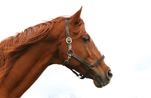 cavalo-fundo-branco-foto