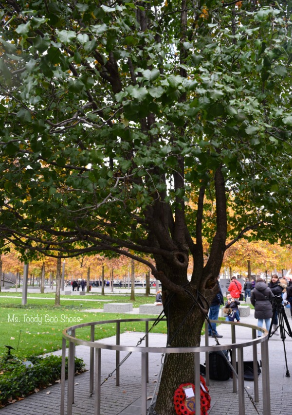 """Survivor Tree"" at 9/11 Memorial , New York City --- Ms. Toody Goo Shoes"