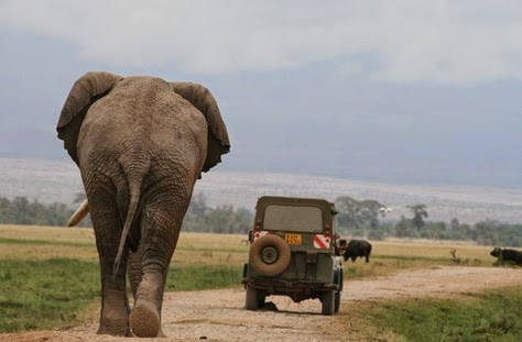 africa's largest elephant killed