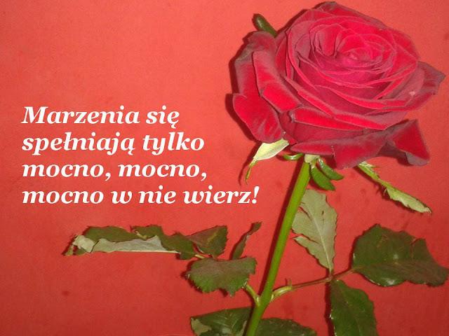 Marzenia się spełniają tylko mocno, mocno, mocno w nie wierz! fot Ewa Różańska