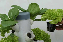 How to Make Hydroponic Nutrients for Specific Plans