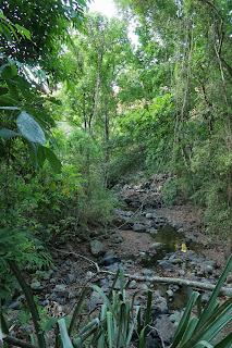 rio coco