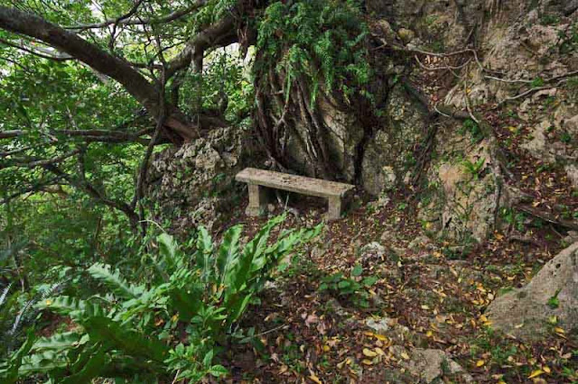 a bench along trail leading to top of a hill towards a castle