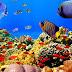 9 Jenis Ikan Hias Yang Bisa Kamu Pelihara