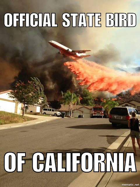 Meme of the Week - California State Bird
