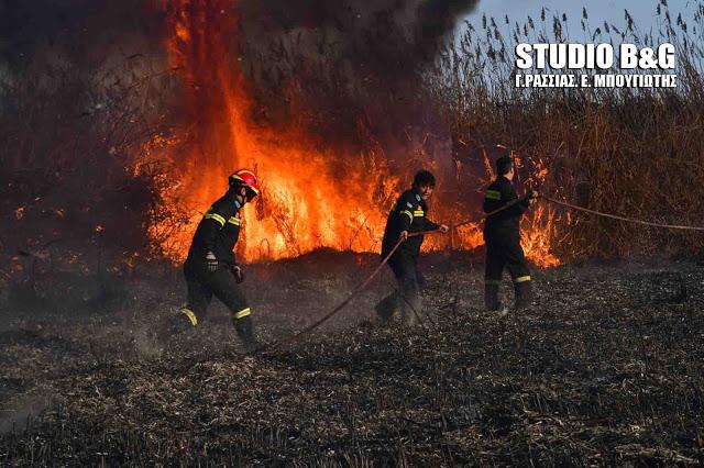 Πυρκαγιά στον Πόρο - Άμεση η επέμβαση της πυροσβεστικής