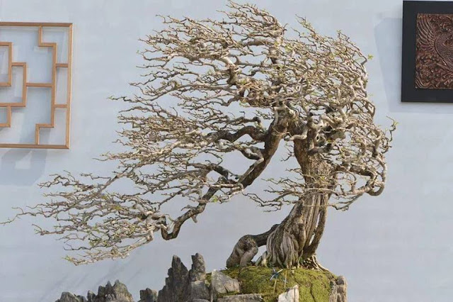 Impressive chinese style saikei Bonsai with landscape