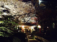 Shinagawa Prince Hotel hanami