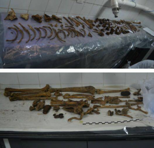 Latest news on the granite sarcophagus discovered in Alexandria