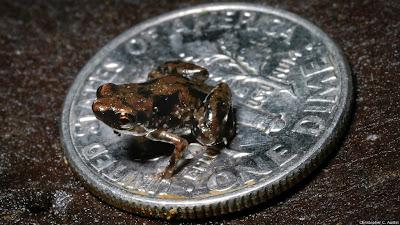شاهد : عشرة أنواع جديدة من الكائنات الحية 130524115710_paedoph