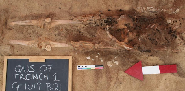Skeletons of two possible eunuchs discovered in Egypt