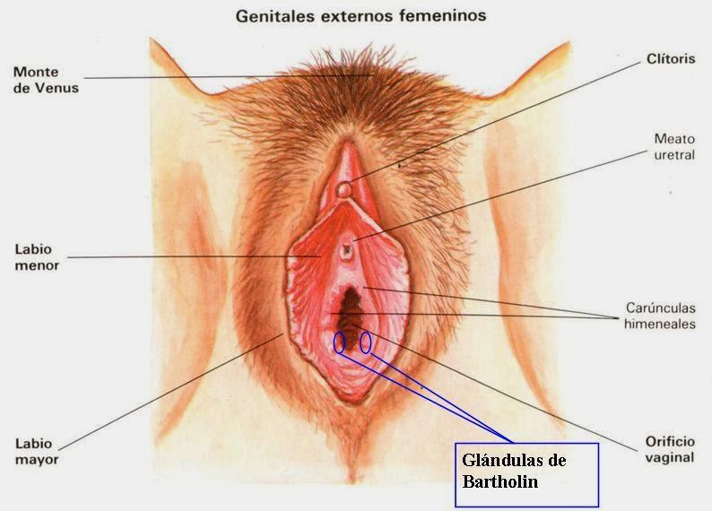 Introducir Especulo Vagina 29
