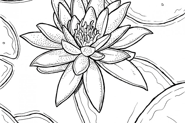 Great Lily Coloring Pages At Lily Coloring Pages Free