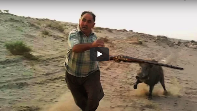 10 περιπτώσεις που τα αγριογούρουνα επιτέθηκαν σε κυνηγούς