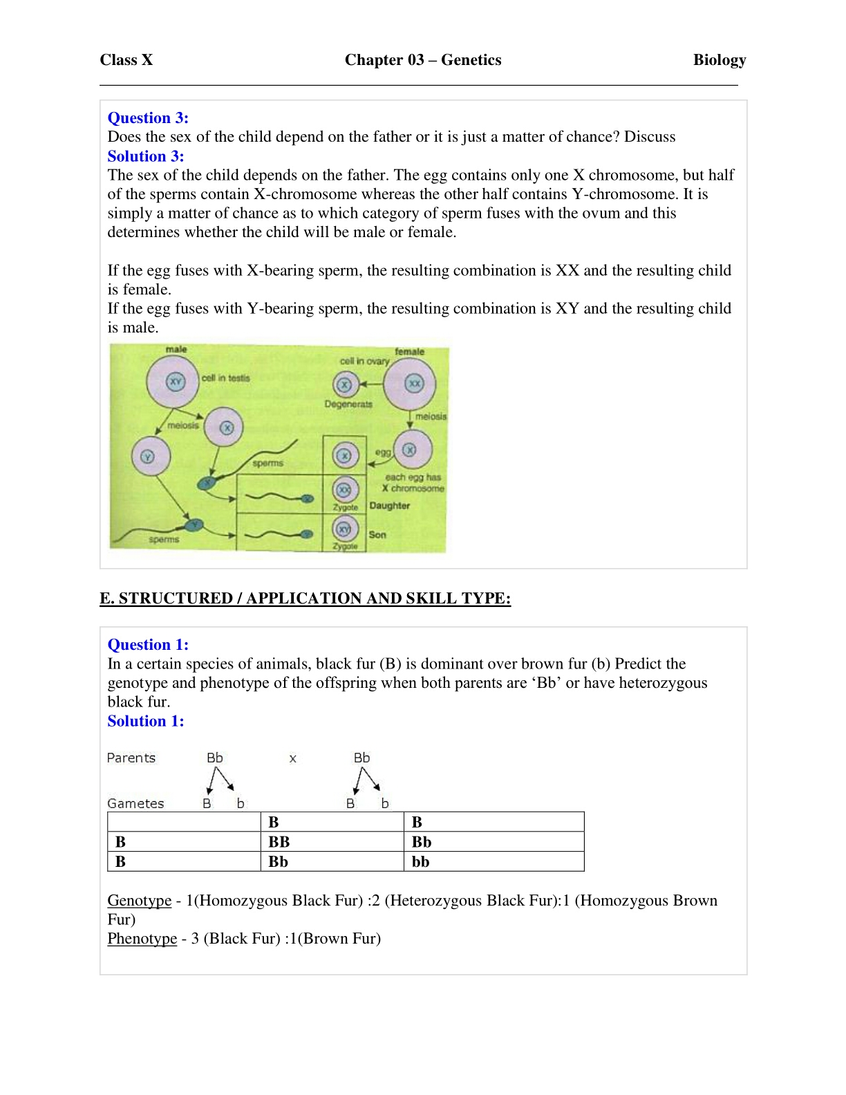 biology genetics notes Page lists activities and worksheets related to a unit on genetics and heredity, designed for high school level biology , worksheets are printable.