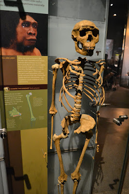 Американський музей природознавства, Нью-Йорк. Хлопчик з Туркани. (American Museum of Natural History)