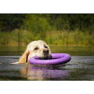 Jak bezpiecznie kąpać psa w morzu